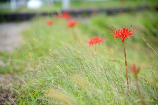 水戸市大場町島地区、環境保全会の活動。景観形成のための施設への植栽等。