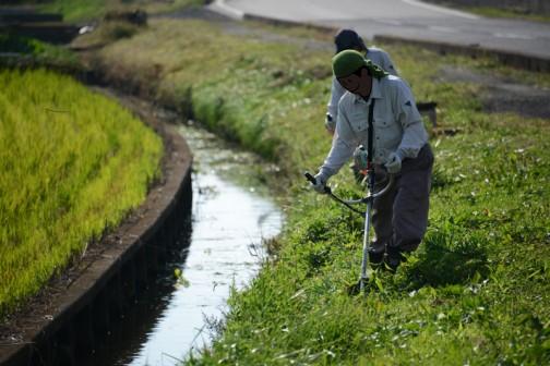 一方別チームはこうやって水路の草刈りなどを・・・