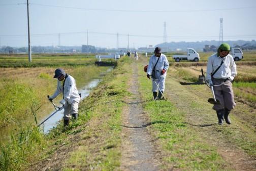 農道の草刈りなどもしながら排水路を遡ります。