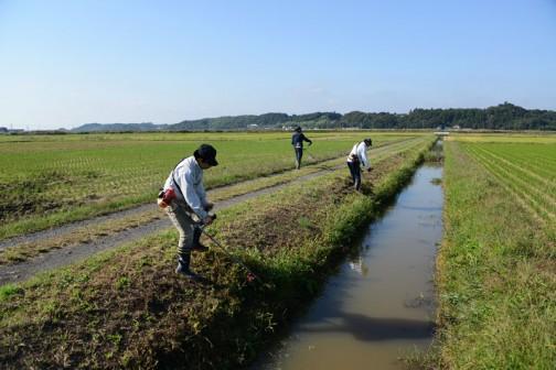 2手に分かれていた草刈りチームは、排水路で合流してスライドモアの刈り残しを刈っていきます。