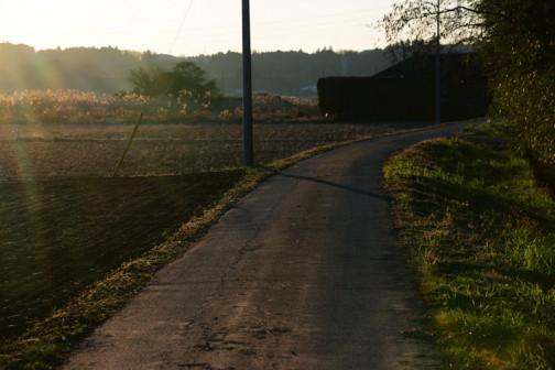 2016年初めの朝日です。涸沼川に向かう道が朝日にてらされて光ってます。