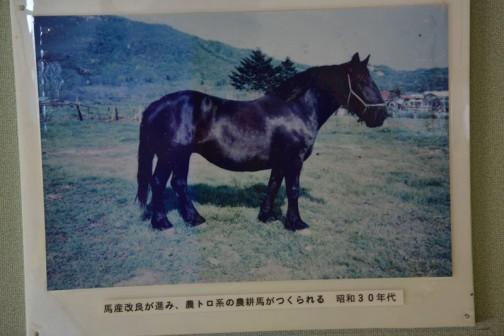 馬産改良が進み、農トロ系の農耕馬がつくられる 昭和30年代