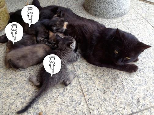 去年の7月の写真。この年生まれた子供達、今残っているのは親ネコもあわせて3匹です。