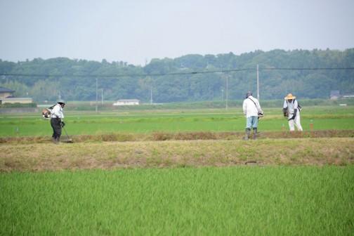 ④遠くにもう一方のチームが縁石の脇や農地の法面などを刈って進んでいます。