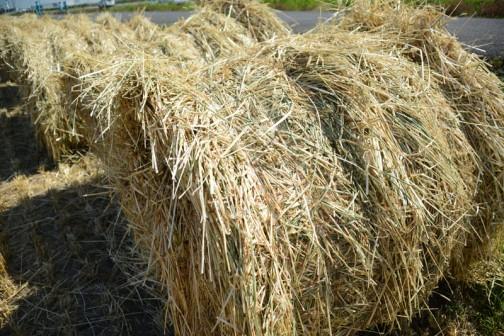 麦のロールがたくさんできていました。実際にみるとサテンのような光沢があるのがわかるのですが、写真になるとそうは見えないなあ・・・うまく見たときの印象が写っていなくて残念です。