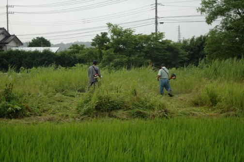 2010年草刈りのようす