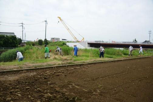 昨日、川べりの草刈りのようす。橋が新しくなったので風景が一変してしまいました。