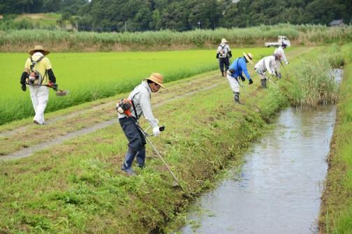 水路法面の草刈です。