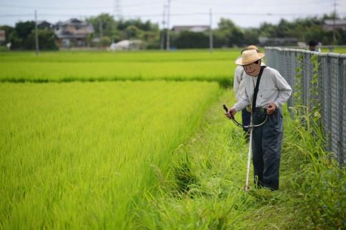 これも同じく農地維持活動、「畦畔・農用地法面の草刈り」