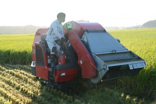 飼料稲の稲刈り2016