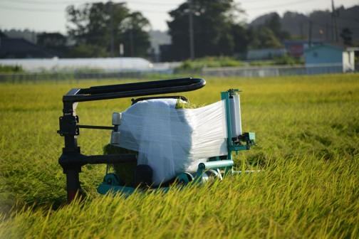 飼料稲の稲刈り(ホシアオバ)2016