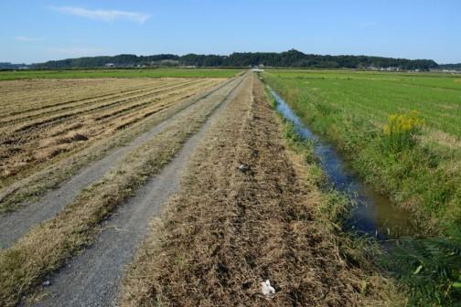 スライドモアが刈ったあとはもう黄色くなっています。残った水路の際をこれから刈って行くわけです。