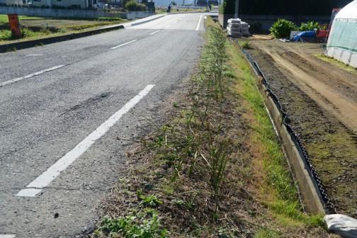 ここはヒガンバナを植えた法面ですが、ここにも側溝があります。ヒガンバナの管理のときに危ないというので、フタをしようというのです。