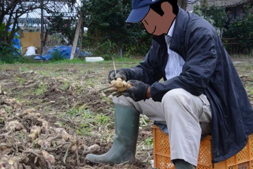 ちょっとした木の棒で泥を落としています。ショウガはボコボコと入り組んだ形をしていますからめんどくさいなあ・・・