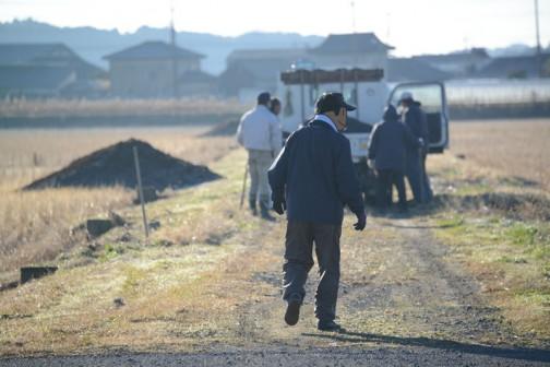 さっそく一台目が登場です。農道の左脇に見える山は飼料稲を作る田んぼのための堆肥です。飼料稲を食べた牛の糞が堆肥となって戻ってきているんです。