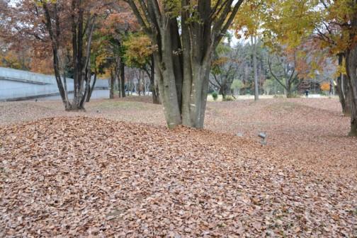 今にも泣き出しそうなどんより空。ケヤキも葉っぱが落ちて寒々しいです。
