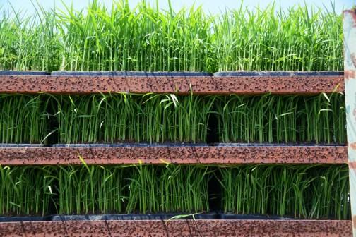 今日の作業面積から苗のトレーの数を割り出し、必要数積込む感じなのでしょう。
