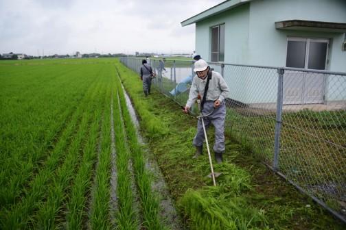 お茶が終ると今度は刈りながら戻ってきます。畦畔の草刈り。