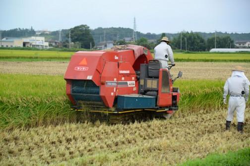 コンバインで飼料稲を刈って、乳酸菌を掛けて機械のおなかの中で丸めて・・・