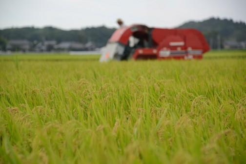 飼料稲の稲刈りはしばらく続きます。