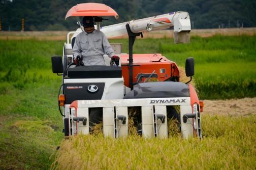 飼料稲の稲刈りは中断したのかと思ったら、別チームが動いているみたいでした。