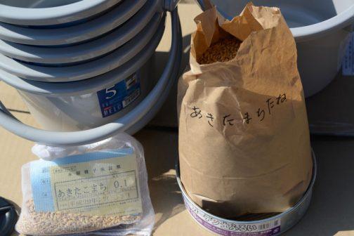 ひとつは近所のMさんが方々かけずり回って探してくれた(Mさんありがとうございます!)このあたりのあきたこまちの種籾です。