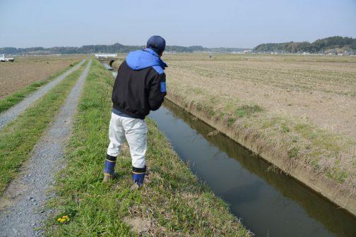 水路の点検です。春ですから鮒や鯉がこんなところまで入り込んでいます。