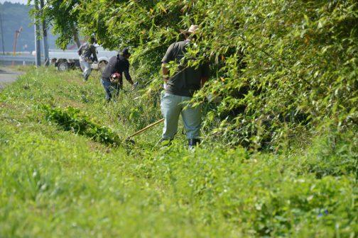 緑・緑・緑・・・6月に入って一気にあたりは燃えるような緑。水路の草刈りの写真もグリーンモンスターの勢いにに飲み込まれてしまいそうです。