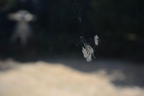 これは室内側から撮った衝突痕。泥っぽいけど◯ン◯でしょうねえ・・・時間はAM10:40