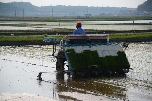 今は6月、一雨ごとに稲が青くなってきています。そうして、あと2月とちょっとで飼料稲の稲刈りが始まって、そおうこうしているうちに年末でお正月です。どうにかして欲しいこの時の流れ。