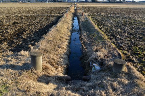この写真は対象1本目の水路の作業が終わり、二本目に入っているところです。水面が途切れているのがわかるでしょうか?その部分はアシカキが繁茂している部分です。