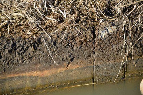 これが柵板を横から見たところ。水位は多少上下しますが、水面から出ている回数が多いほど「摩耗」している感じです。