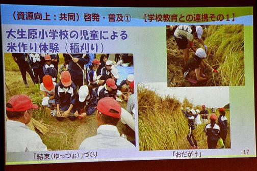 これは地域の小学校との交流の中で稲刈りをしたよ・・・という写真。その中で刈った稲を縛るヒモのことを「ゆっつぉ」というのだというところがおもしろいです。響きが「ユッツォ」イタリア語みたいじゃないですか?