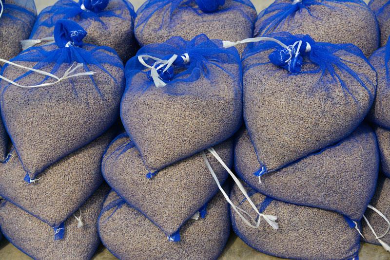 温湯消毒にむけて続々と種籾の袋ができあがっているのですが、この脱芒機が律速となっているみたいです。あと1台必要ですね!