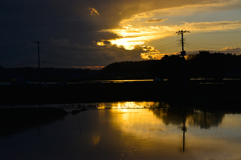 夕暮れ時は空も、それを映す田んぼも刻々と変化するのがとてもきれいです。
