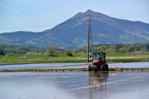 横往復の荒代かきが終ると、今度は筑波山を背にして縦往復です。詳報といいながら写真は結局山の写真ばかりでした。