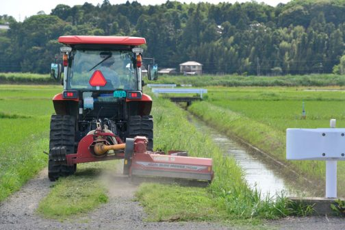 機械で定期的に草刈りするようになって少し雑草の植生が変わってきたように思います。背の高いセイタカアワダチソウや、ヨモギなどは減っているのではないでしょうか。