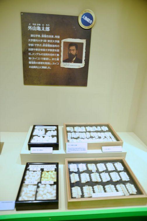 奥のパネル,人物紹介。 外山亀太郎(とやまかめたろう)  遺伝学者、蚕種改良家。帝国大学農科大学(現・東京大学農学部)で学ぶ。現蚕種製造所の技師や東京帝国大学教授を歴任。メンデルの法則を初めて動物(カイコ)で確認し、また雑種強勢の原理を発見し、カイコの品質向上に貢献した。 とあります。「雑種強勢」そんな言葉があったんですね!