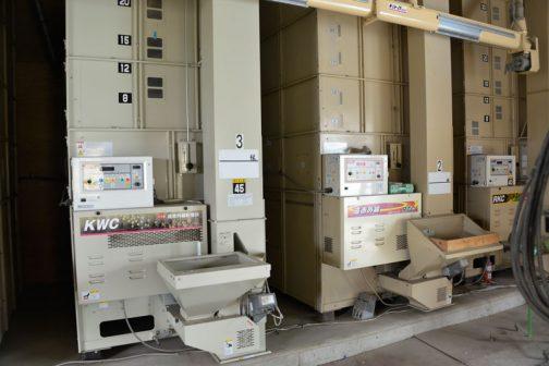 たくさんのお米を処理するのでしょう。各種機械が繋がってラインが形成されています。乾燥機から・・・