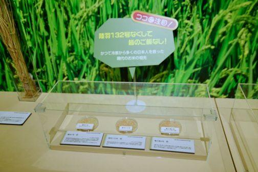 このケースに入った3つの籾たち・・・かつて冷害から多くの日本人を救った時代のお米の祖先だそうです。 タイトルは、陸羽132号なくして皆のご飯なし!