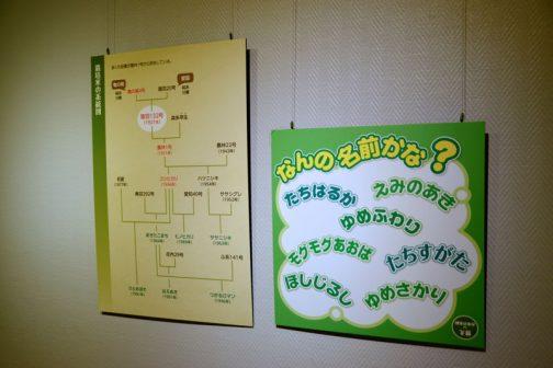 後はパネルの展示です。クイズと系統図。モグモグあおばってのがいいですね。そのような名前を集めた・・・ということなのかもしれませんが、ふわふわした名前が多いです。
