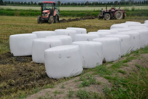 できたサイレージは、このように田んぼの隅に並べられます。後にオーナーがトラクターで運び出すのだそうです。