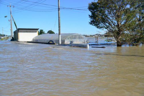 戻ると家の前は涸沼川からどうどうと水が流れ込んでいます。