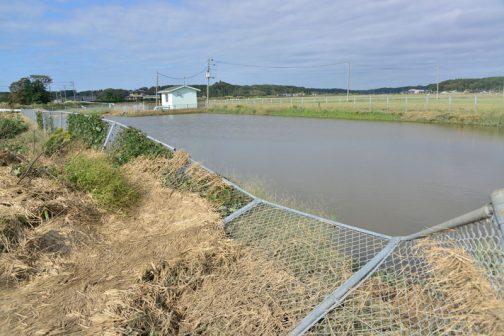 と、見回していたら、島地区の揚水機場のフェンスが倒れているのを発見。