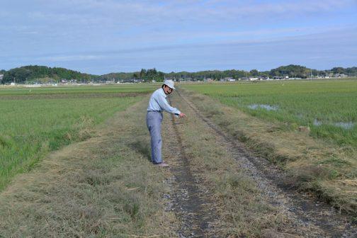 農道の点検など、ざっと見てきました。