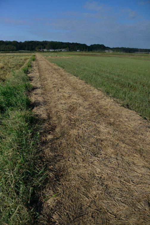 田んぼの中ですからどうしても同じような風景になってしまいますが、上の写真とは違う場所です。
