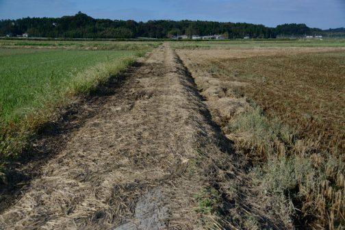 まずは状況確認です。島地区の通学路は、そのほとんどが田んぼの中を通ります。その田んぼ全てが灌水してしまいました。