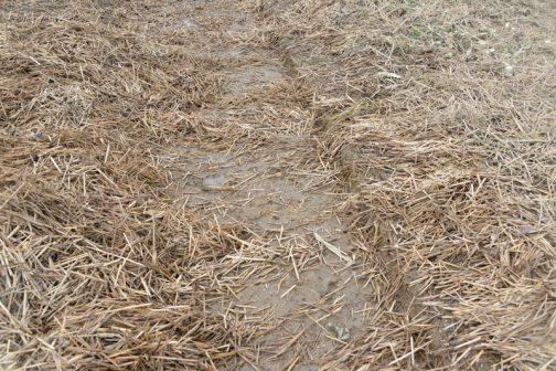 ワラをどかして出てきた土部分なのですが、段差になっているのがわかるでしょうか?直前にトラクターで耕うんした部分がそっくり流された痕だそうです。柔らく、ほかほかに耕された土は遠くに流れて行ってしまい、トラクターに踏み固められた固い部分が残っているのだそうです。