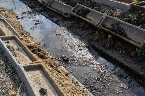 小排水路は結構泥で埋まっています。来年度の予算で浚渫するようですね。