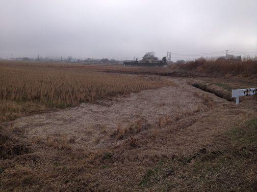 以前見に行った時にこの状態だった部分の稲わらを搬出します。薄く載っているように見えますが、これを集めてみるとビックリするような量になります。